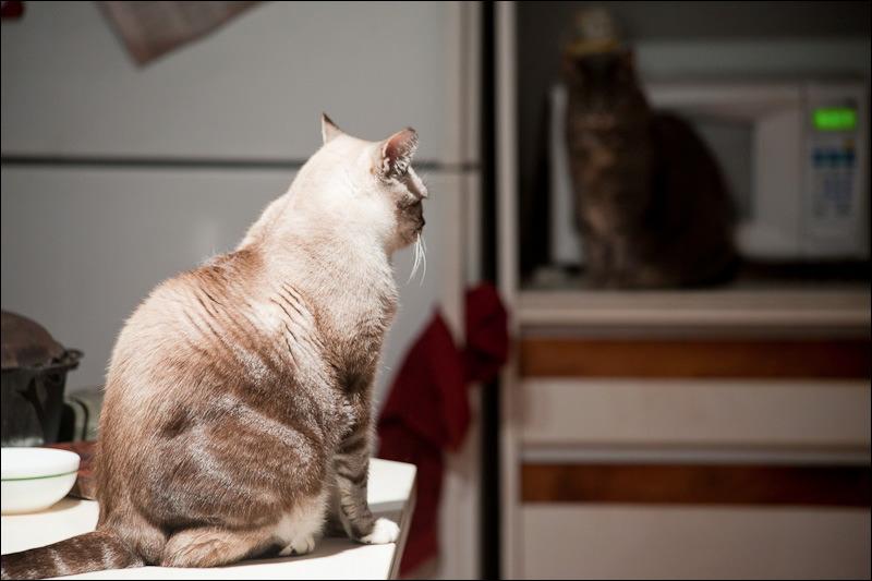 Skip A Dose Not Eating Insulin Cat