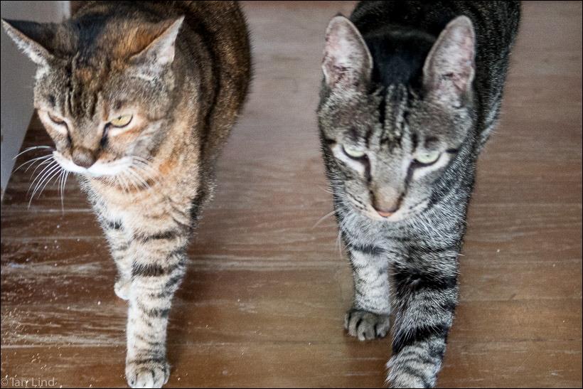 Kili and Romeo