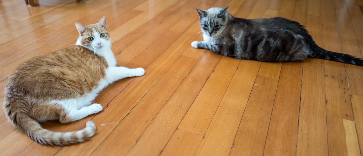 Toby & Duke