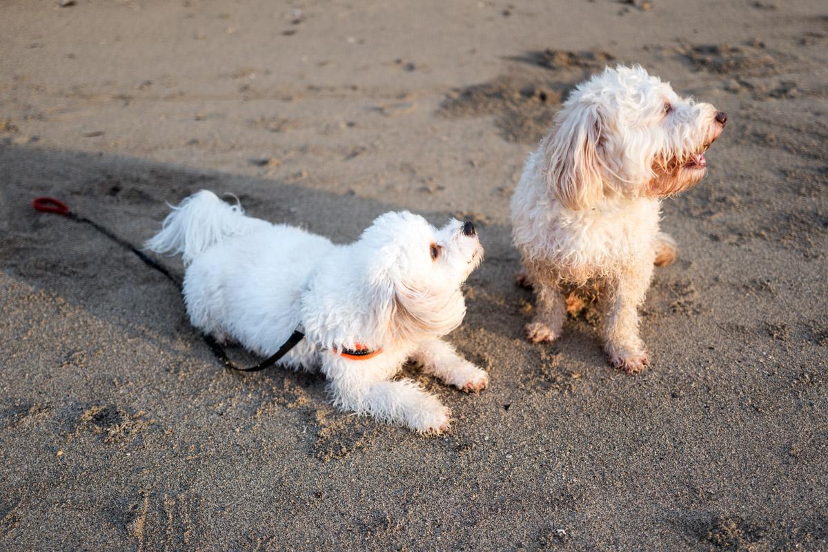 Tucker and Marlo