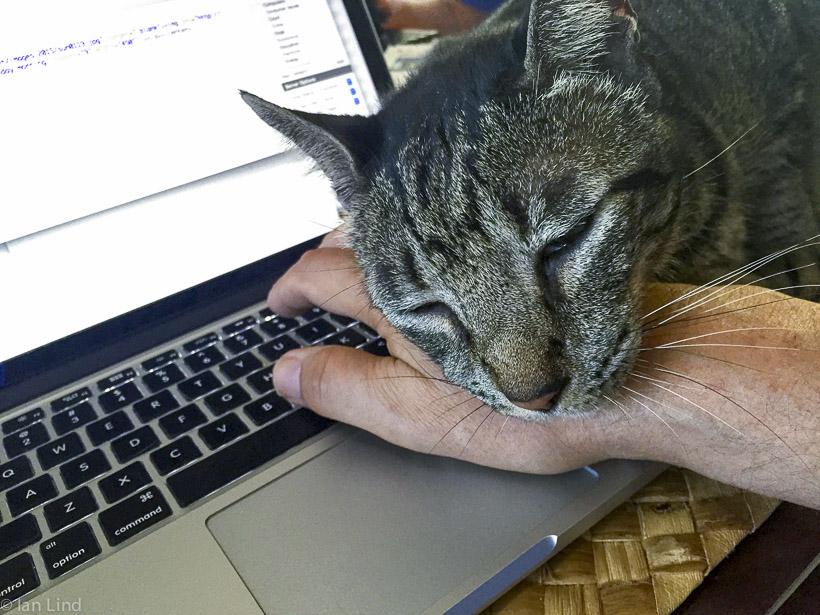 Co-blogging
