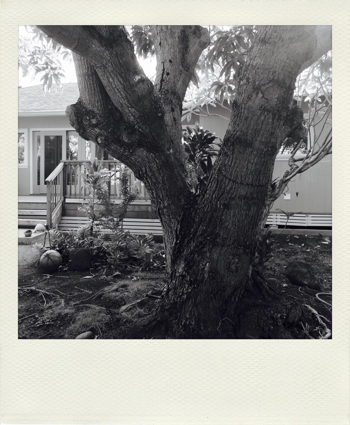 Bonnie's tree 2016