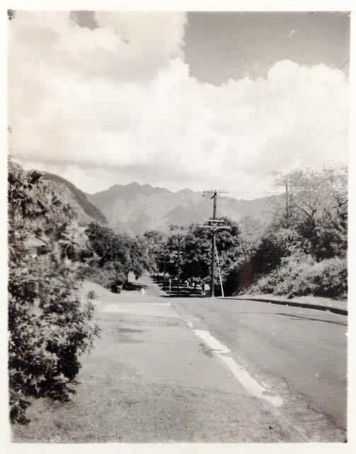 Looking into Manoa Valley